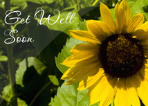 Sunflower Get Well Cards